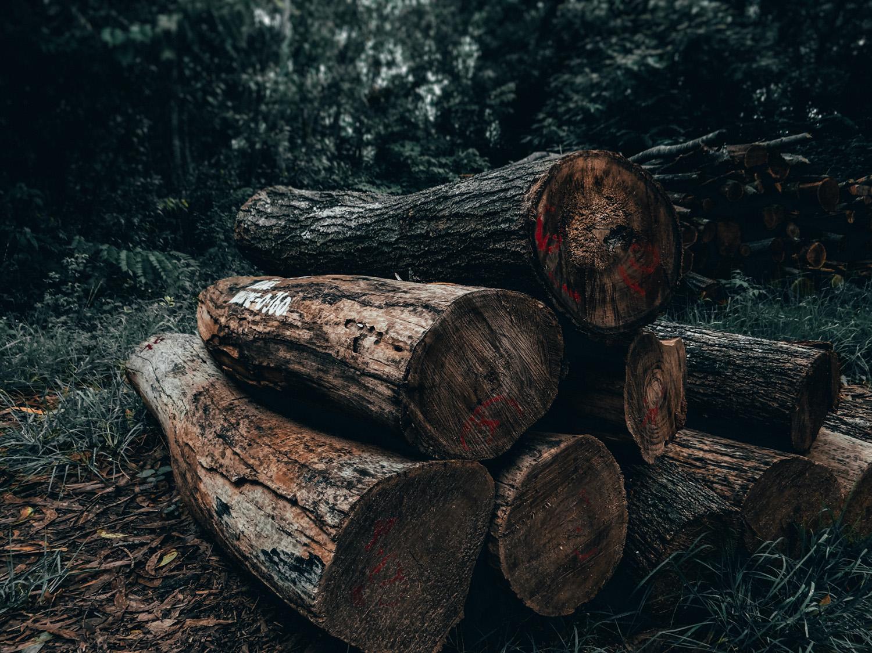 Ban deforestation