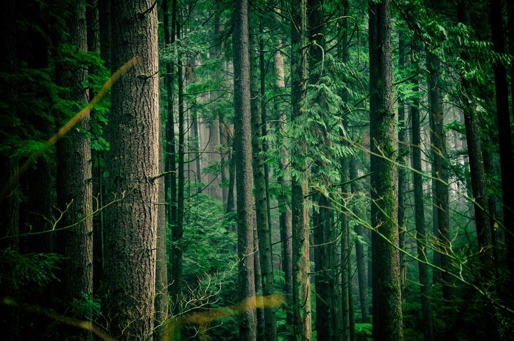 RE-GREEN THE PLANET - programme de reforestation - Planter des arbres - planter des forêts pour lutter contre les effets du réchauffement climatique