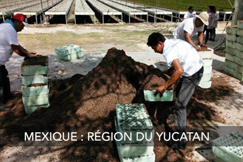 Planter des arbres au mexique - Région du Yucatan
