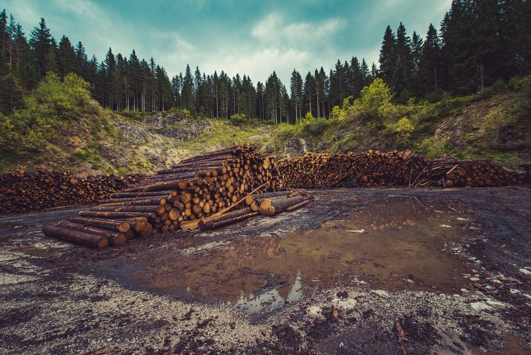 RE-GREEN THE PLANET - planter des arbres pour protéger l'environnement et lutter contre le réchauffement climatique
