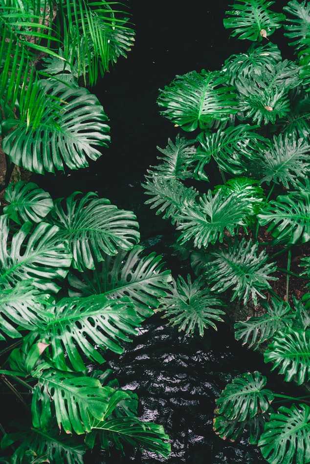déforestation les catastrophes naturelles
