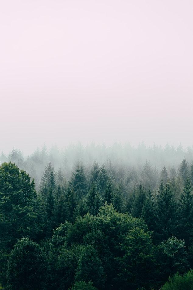 Déforestation la situation les causes et les conséquences
