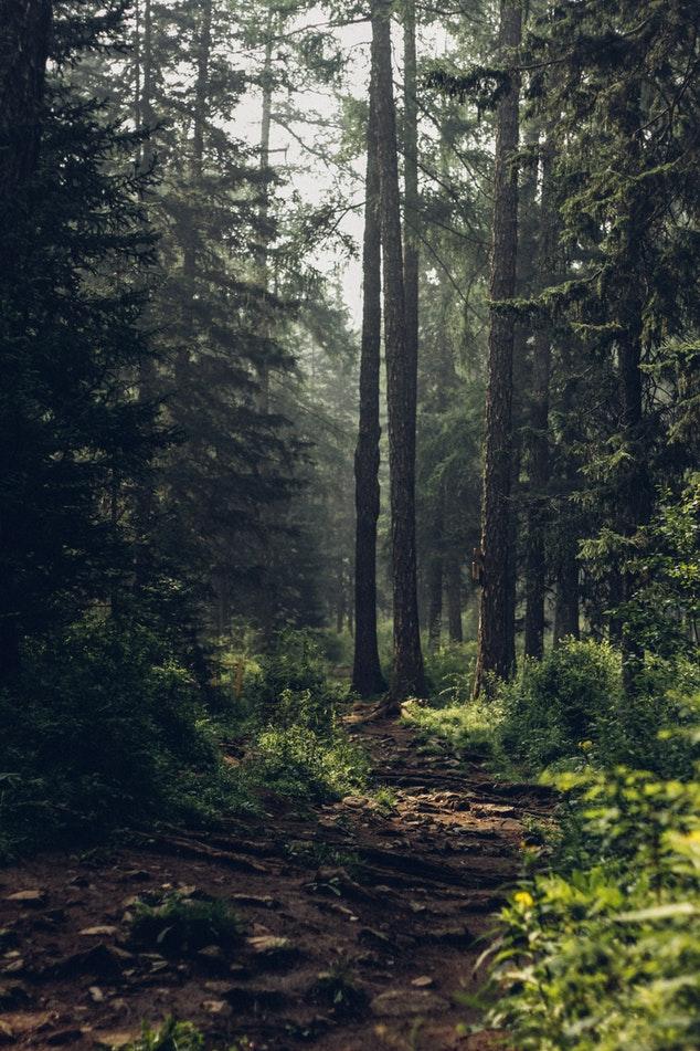 La forêt un bien pour la vie