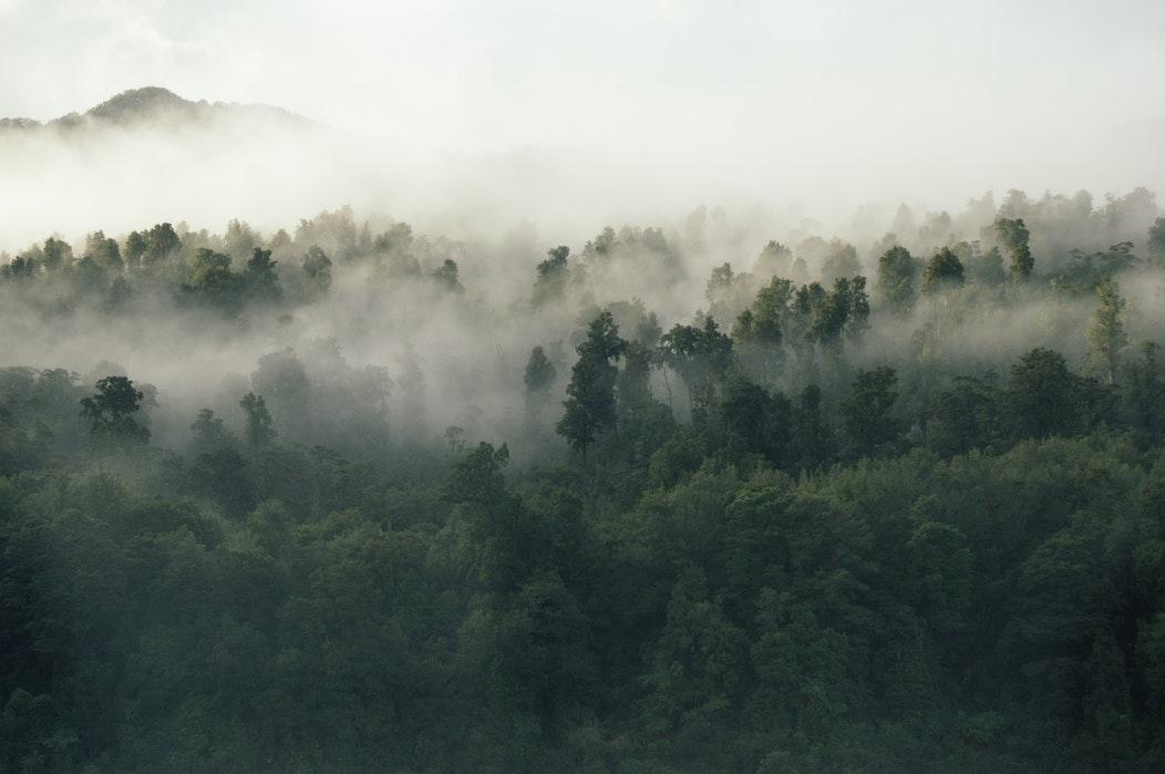 Les arbres purifient l'air