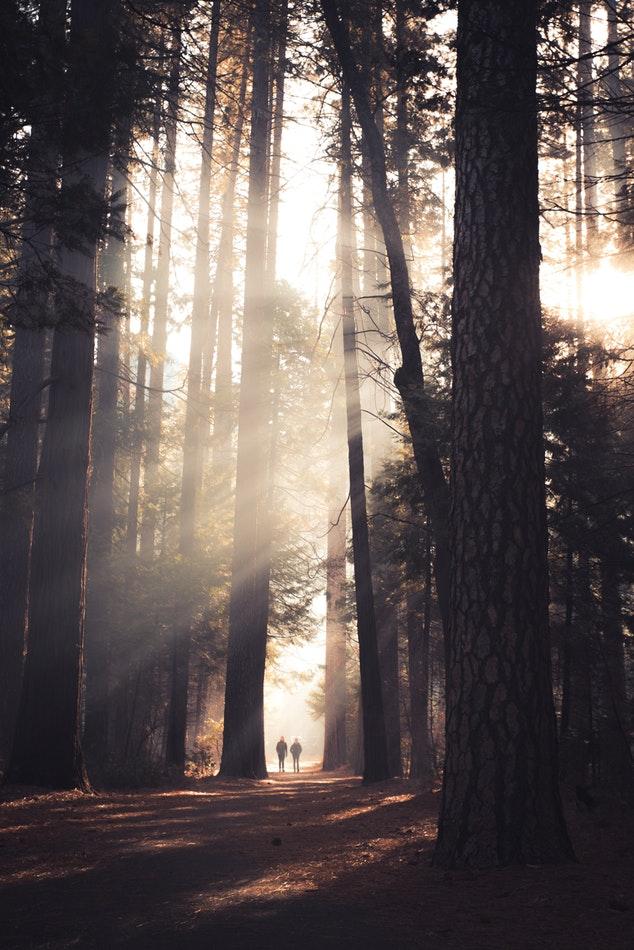 Journée mondiale des forêts - Re-green the planet