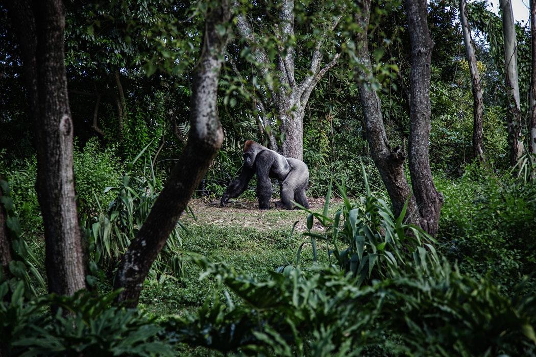 Déforestation perte de la biodiversité