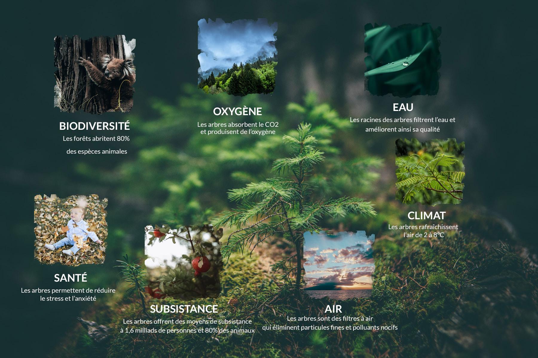 RE-GREEN THE PLANET pourquoi planter des arbres