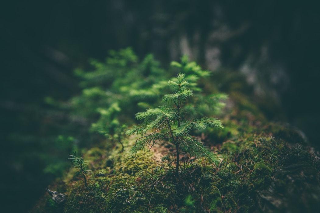 Planter des arbres pour lutter contre le réchauffement climatique.
