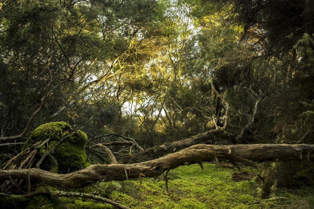 Faire don d'un arbre RE-GREEN THE PLANET