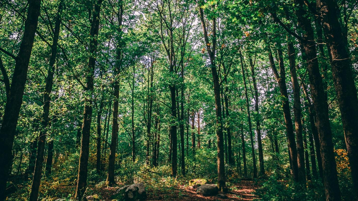 Planter des arbres en AMAZONIE RE-GREEN THE PLANET