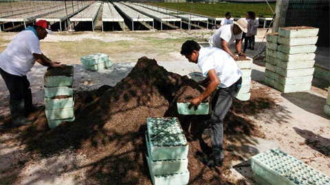 Re-green the planet - programme de reforestation créé par le Free Spirit Foundation - région du Yucatan au Mexique