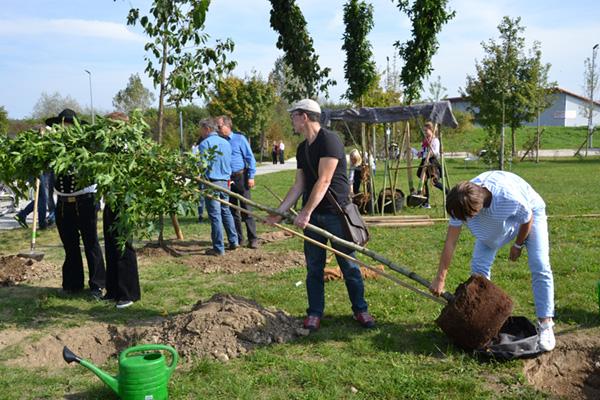PLANTATION d'arbres RE-GREEN THE PLANET