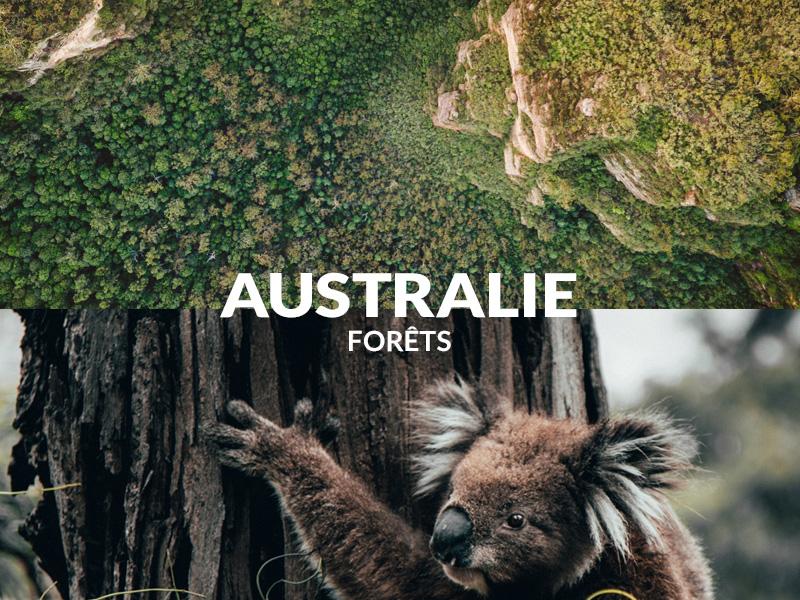 Planter des arbres en Australie