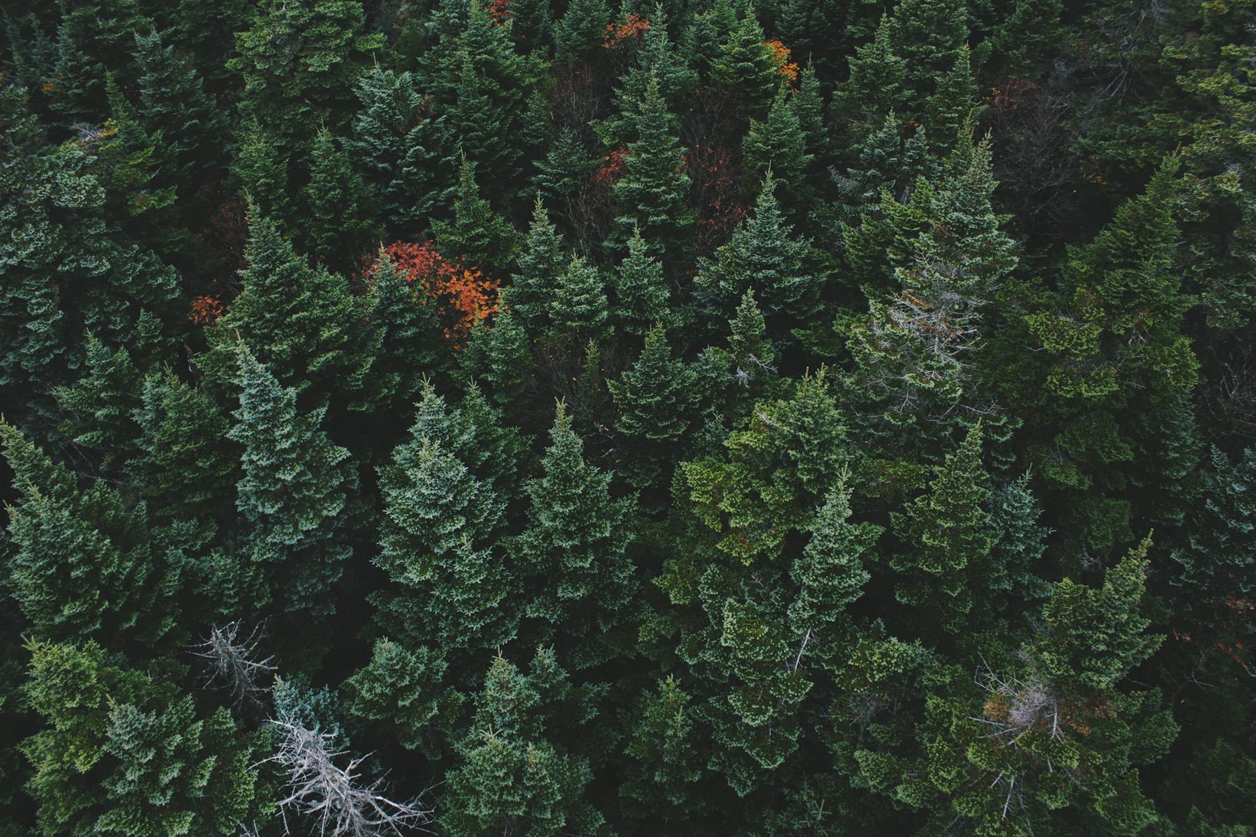 Ban la voix de la forêt