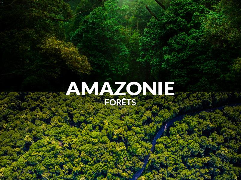 Nos zones de reforestation