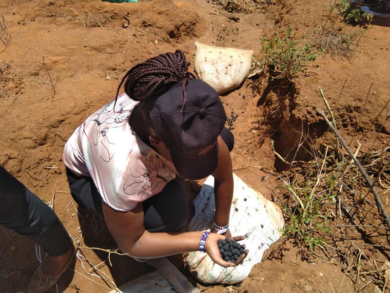 Plantation d'arbres au Kenya