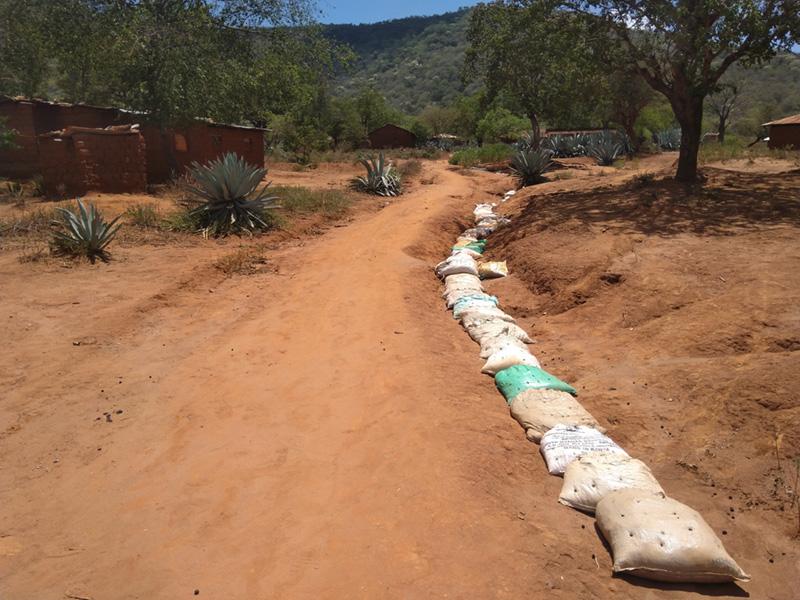 Don de 11 000 graines disséminées à Voï au Kenya