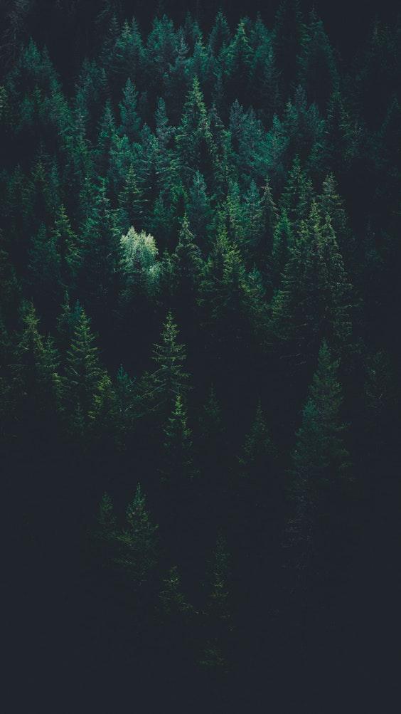 Deforestation climate change