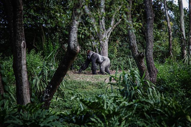 Deforestation biodiversity loss