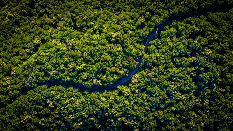 Ban Amazonia Amazon rainforest