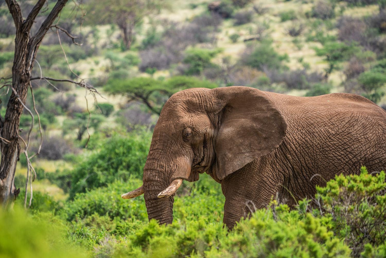 Ban Mara Mara elephants seedballs planting trees