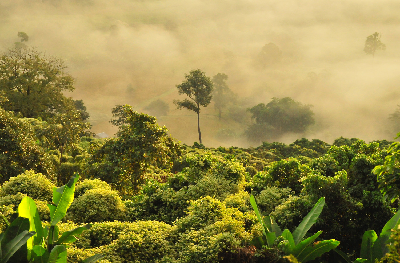 Ban Planting trees on the Yucatan peninsula
