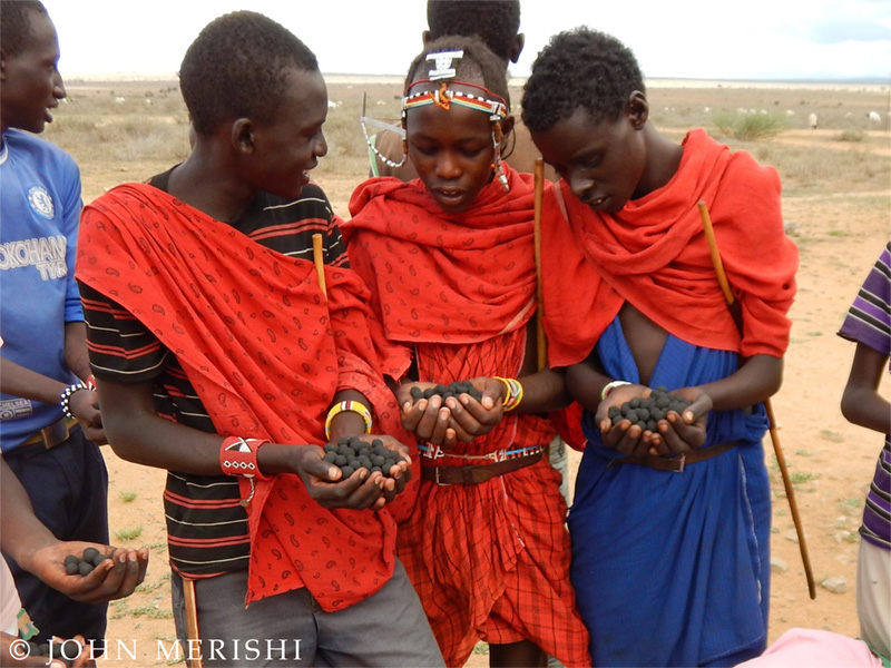 Seedballs Lion Guardians coexistence lions people africa kenya