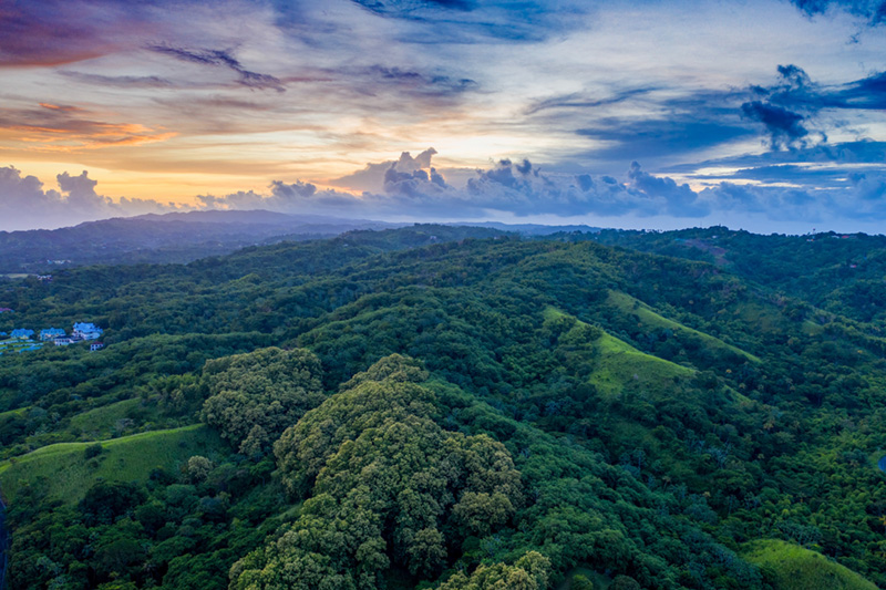 Planting trees in the Amazon rainforest re-green the planet