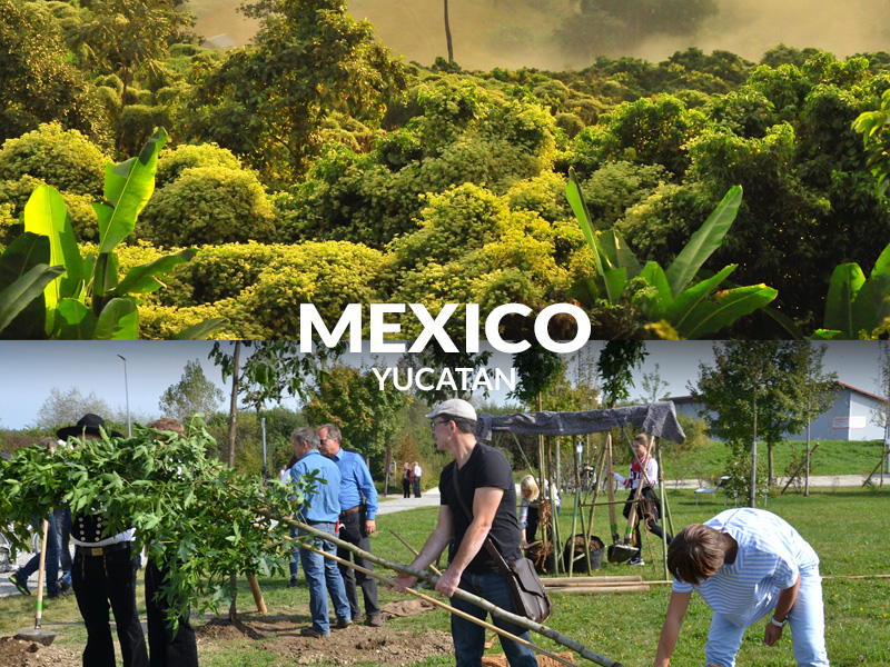 Planting trees mexico